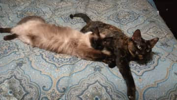Jasmine and Olivia