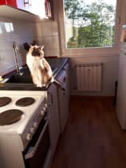Kitchen with Puck