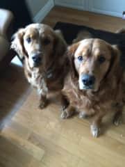Jake & Dex - Glendon, Alberta