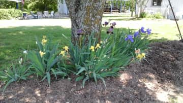 One of our flower beds.