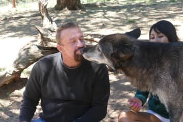 Alpha male checking out Gary at Wolf Sanctuary in Colorado.