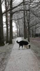 Walk on a wintery morning