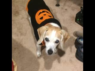 Max at Halloween..age 16