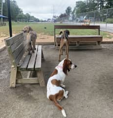 Mojito (Molly's dog) and some friends at the dog park