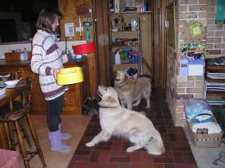 Circa 2008, dinner time for my two golden retrievers