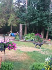Part of the back yard