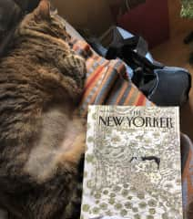 Roxy Mittenpaws is into light reading when there are cats and blankets on the magazine cover.