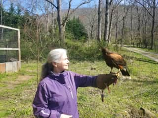 Victoria communicating with a falcon - https://curtiswrightoutfitters.com/falconry/