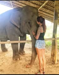 Elephant in Thailand. An nGo rescue animals in the board close of Myanmar