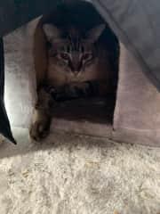 Celeste Hiding