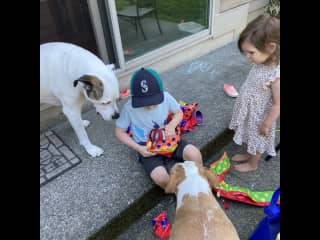 The dogs helping Anders open his birthday presents this year