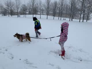 Dress kaibi warm and taking him walk during cold winter in Canada