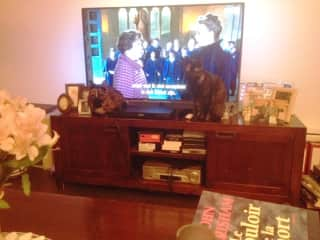our two cats do not like TV !