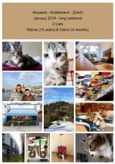 Housesit 2 Cats - Zurich - Switserland - 2019