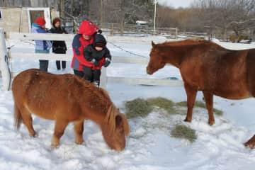 My horse Jazzy and pony Claude