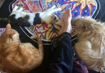 Hard to get any work done when everyone in the family wants a belly rub! Cottonwood Heights, Utah