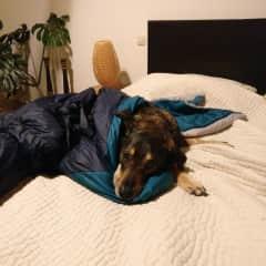 Sleeping buddy Max :-)