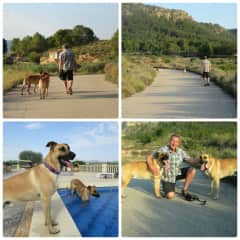 THS-S.E. Spain-British expats-abondened, Spanish rescue dogs, big and strong, weigh over 40 kg.-June 2018 - 3 weeks