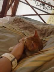nap time with a Mr. Malcolm (a friend of mines kitten that I took care of while he was on holidays!