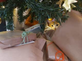 Tofo in a typical Christmas occupation