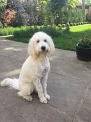 Yoyo in our garden