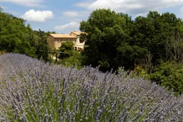 View from the pool through the lavender to the house