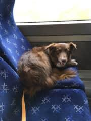 Luna, revelling in train travel!
