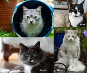 Our Fur Clan  petsit on the West Coast of New Zealand - Mojo, Bijoux, Shmoke and Socky