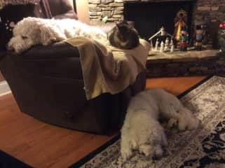 Pascal, Soren, and Pants doing what they love to do- nap!