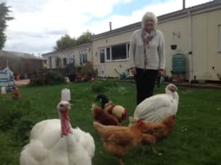 Jo with the hens and turkeys Gloria and Beatie