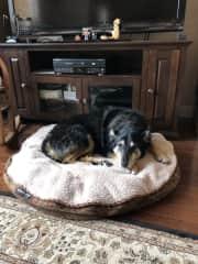 Tasha relaxing at home