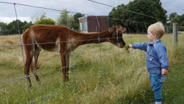 Milo feeding alpaca in New Zealand