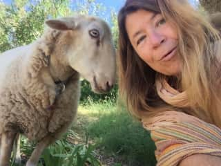 Selfie with my friend's adorable sheep