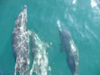 Enjoying the wildlife in the Sea of Cortez.