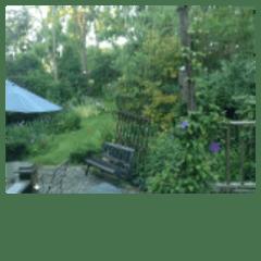 My back yard.