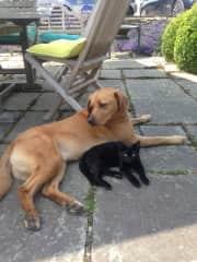 Best pals....