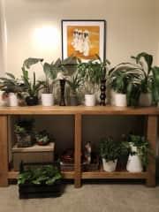 I love my indoor plants.