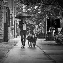 Angela, Diesel and Emilie - walks on a rainy NY day
