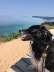 Twelve year old Trapper on the dunes above Lake Michigan.