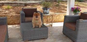 Toby enjoying outside