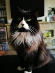 Desmond. Breed - Street cat! He's a savvy diva who knows who to get you under his thumb...!