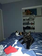 Waking up with Batman and Sadie.