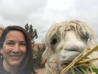Who doesn't love lamas!!