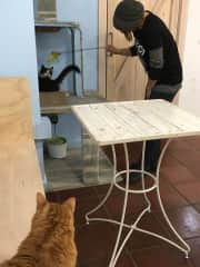 A cat cafe in Barcelona. Awesome place!