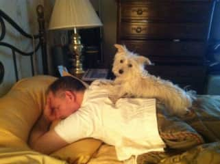 Dad is getting a back rub from Corky, our precious Westie/Yorkie girl.