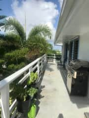 Balcony with basil, mint, thai basil and pineapple plants