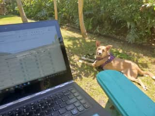 When I work from home, Lucy is never far away!