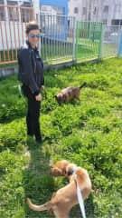 Oskar and Little HotDog, my dogs back home