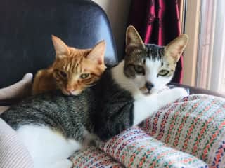 Jack (ginger tom) and Maggie, our sweet cats.