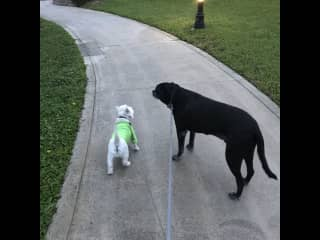 Best friends on an evening walk around the lake.